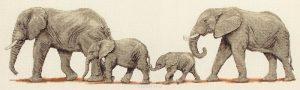 Набор для вышивания крестом ANCHOR «Поступь слонов»