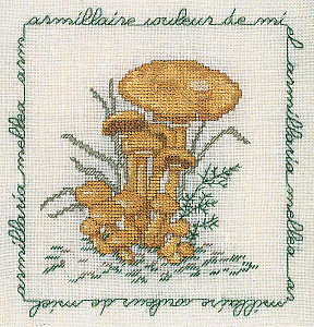 Набор для вышивания крестом Le Bonheur Des Dames «Armillaire couleur de miel» 1685
