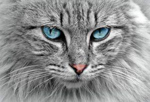 Алмазная мозаика на подрамнике Painting Diamond «Серый кот» GF4317