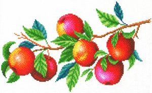 Набор для вышивания крестом М.П.Студия «Урожай яблок» СК-106